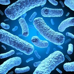 """<img src=""""e-coli.jpg"""" alt=""""picture of e-coli bacteria """">"""